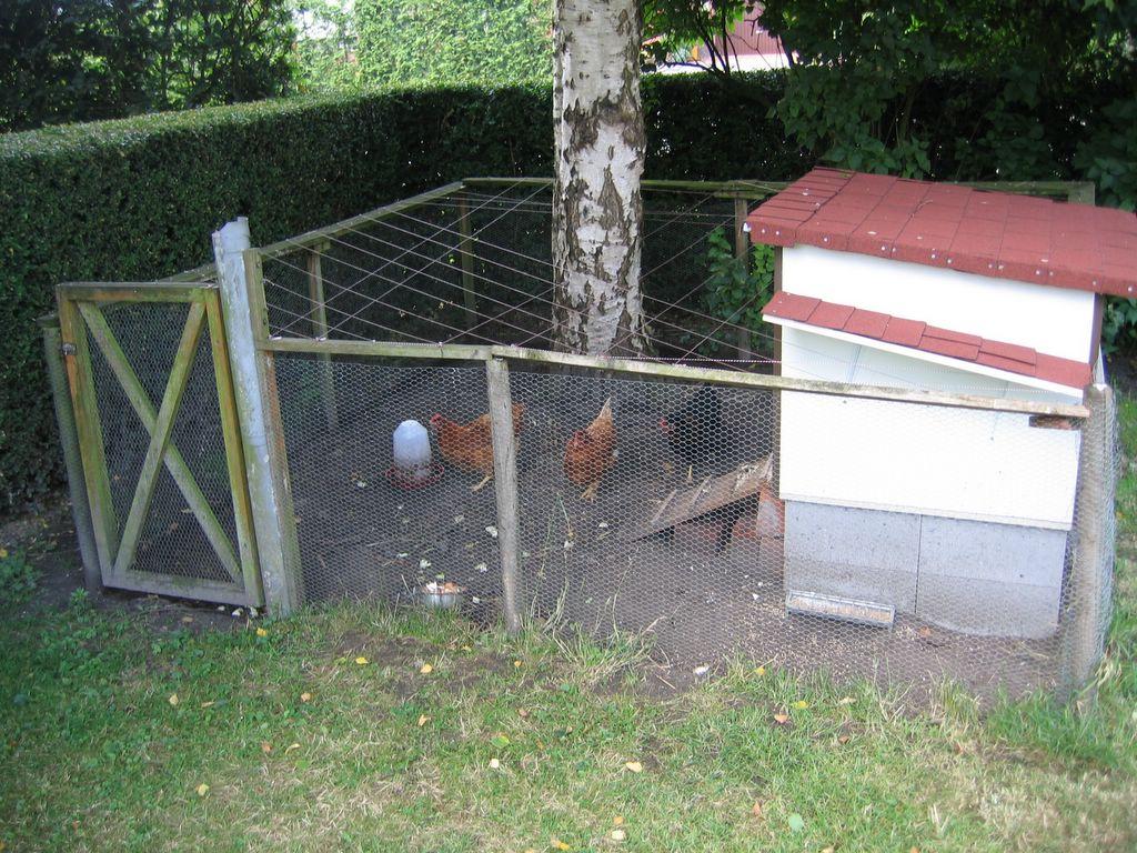GRYNX » Automated chicken feeder